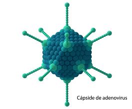 capside-virus